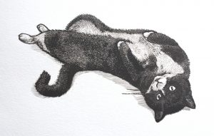 Wood engraving of Jemma the cat